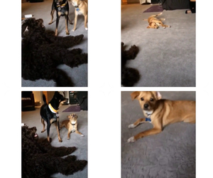 coco, dog, and dogs image