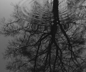 black and white, nature, and Darkness image
