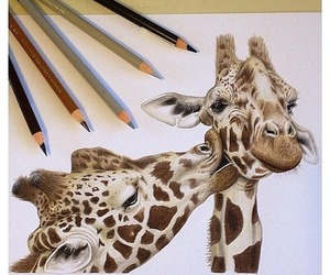 giraffe, drawing, and animal image