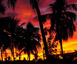 sunset, palm trees, and beautiful image