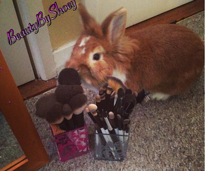 Brushes, bunny, and cosmetics image