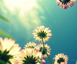 awesome, flowers, and girly image