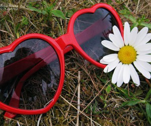 daisy and sunglasses image