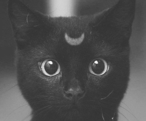 black, cat, and eye image