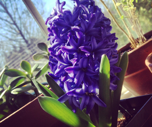 flower, spring, and window image