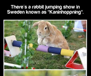 bunny, rabbit, and cute facts image