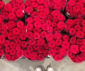 red, rose, and cute image