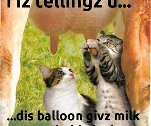 balloon, cat, and udder image