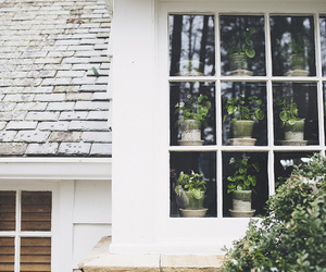 window, house, and plants image