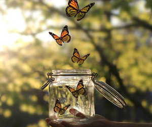 beautiful, beauty, and butterfly image