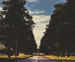 road, tree, and indie image