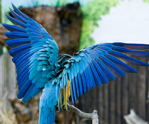 photography, bird, and blue image