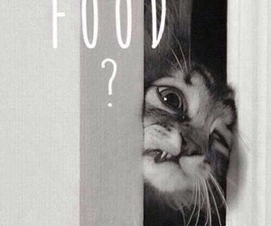 ?, cat, and food image
