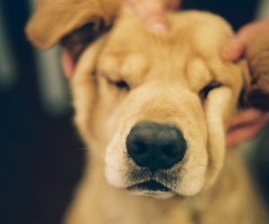awn, dog, and photography image