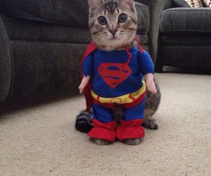 cat, superman, and supercat image