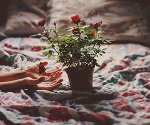 flowers, bed, and rose image
