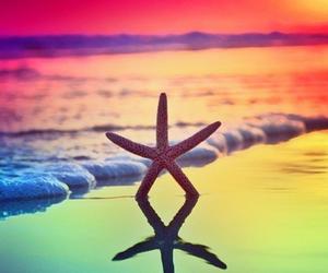 beach, sea, and starfish image