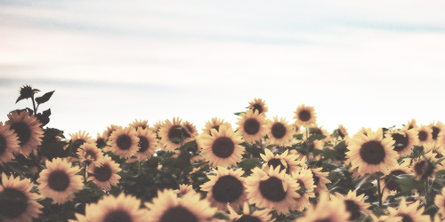 51 Images About Twitter Header On We Heart It