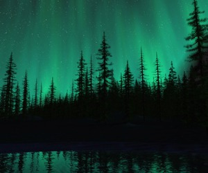 forest, green, and night image