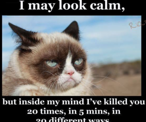 calm, cat, and funny image