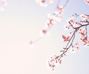 blossom, floral, and flowers image