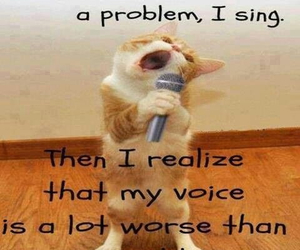 funny, cat, and sing image