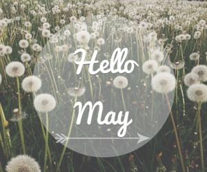 may, hello, and flowers image