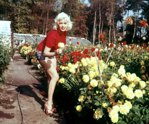 flowers, vintage, and Marilyn Monroe image