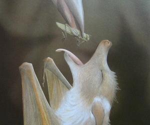 animal and bat image