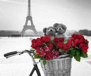 paris, rose, and bear image