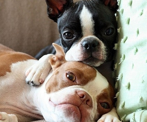 dogs, cute, and adorable image