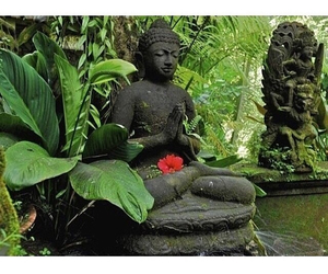 tropical and zen image