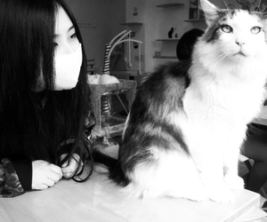 cat, girl, and asian image