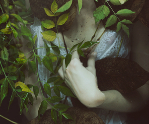 leaves and pale image