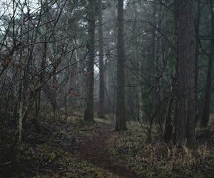 forest, landscape, and moss image