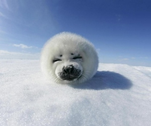 animal, cute, and white image