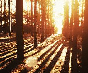 tree, sun, and nature image
