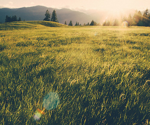 nature, sun, and field image