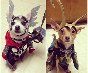thor, loki, and dog image