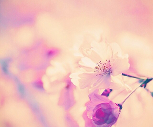beautiful, pink, and traditional image