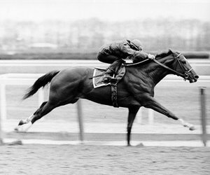 phenomenon, Secretariat, and racehorse image