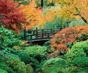 autumn, garden, and japanese image
