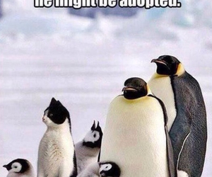 funny, cat, and penguin image
