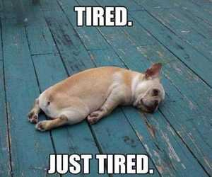 dog, funny, and tired image