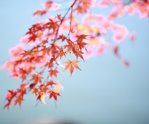 blossom, blue, and bokeh image