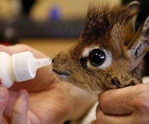 cute, animal, and giraffe image