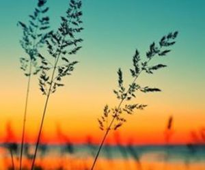 sunset, nature, and summer image