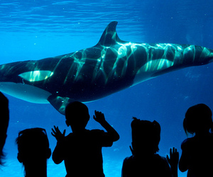 kids and whale image