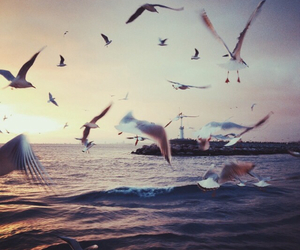 birds, nature, and sea image