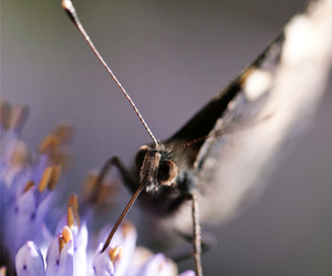 butterfly, canon, and nature image
